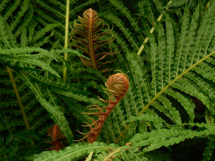 fronds-290848_1920