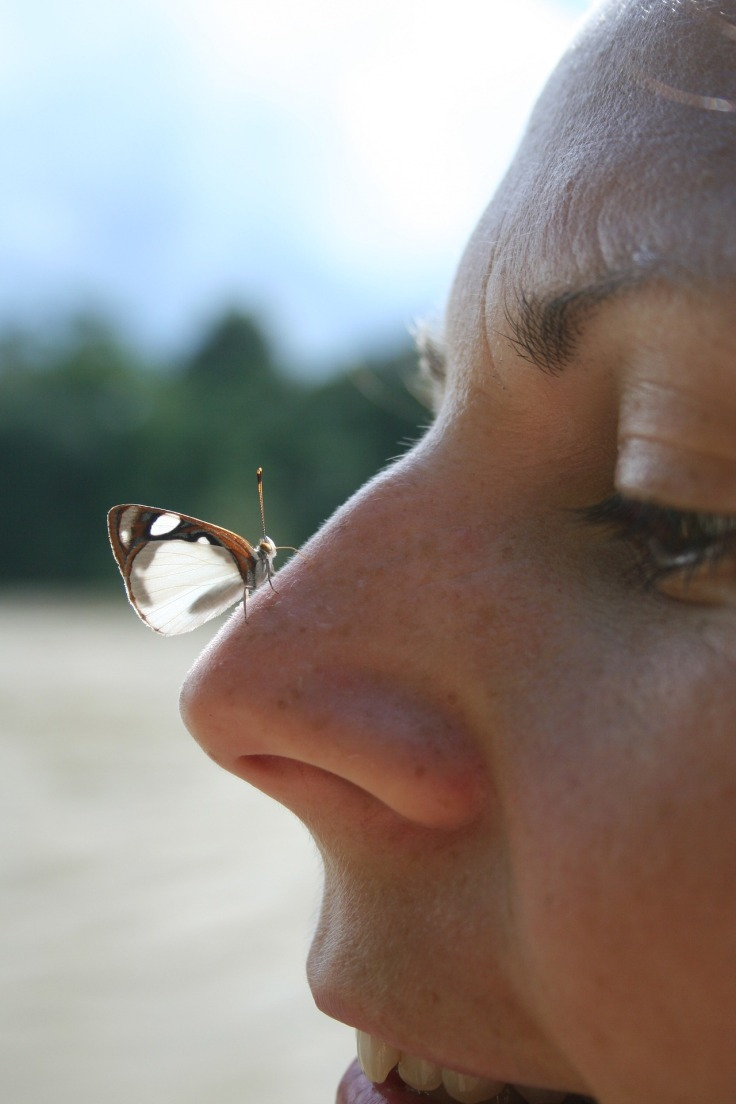 butterfly nose