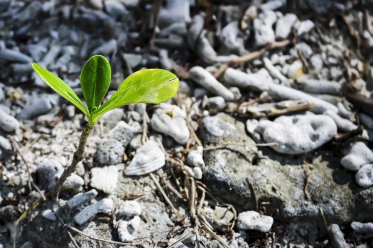 soil-3301161_1920