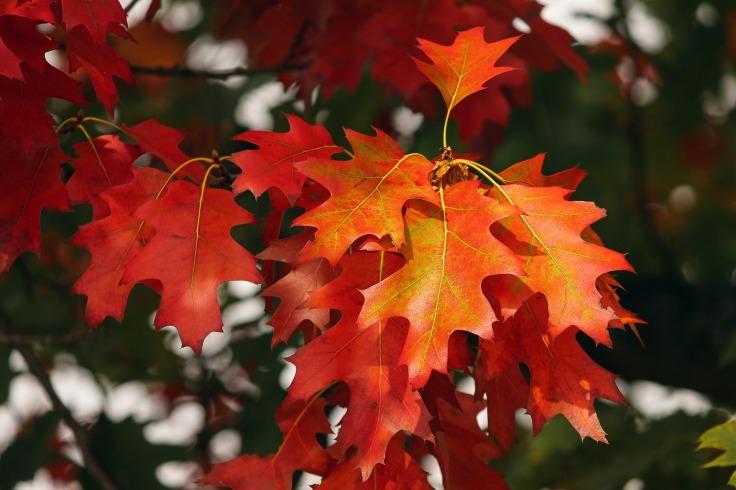 fall-foliage-3705550_1920.jpg