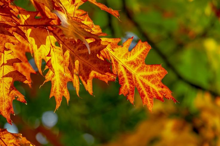 fall-foliage-3736055_1920.jpg